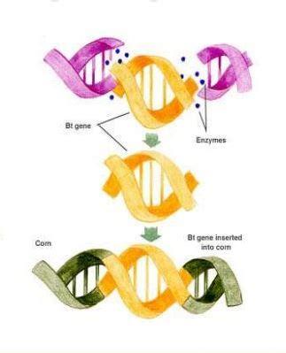 Debate engineering essay genetic